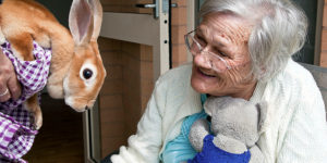 Elderly woman being introduced to rabbit environmental design